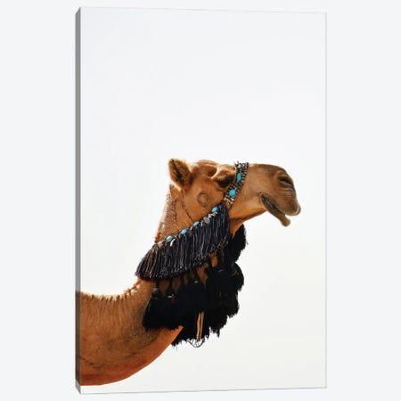 Decorated Camel Canvas Print #KMD45} by Karen Mandau Canvas Wall Art