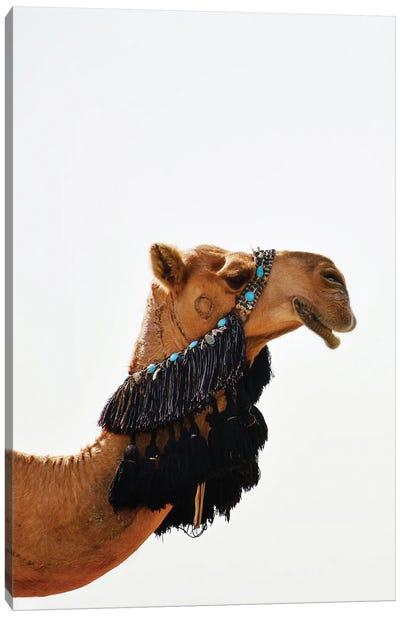Decorated Camel Canvas Art Print