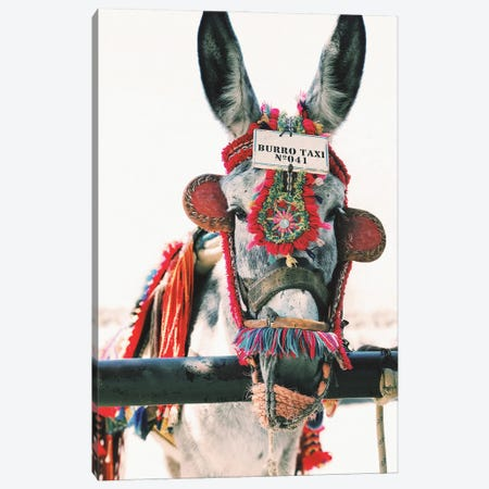 Decorated Donkey Canvas Print #KMD46} by Karen Mandau Canvas Art