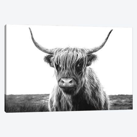 Highland Cow Black And White Canvas Print #KMD65} by Karen Mandau Canvas Wall Art