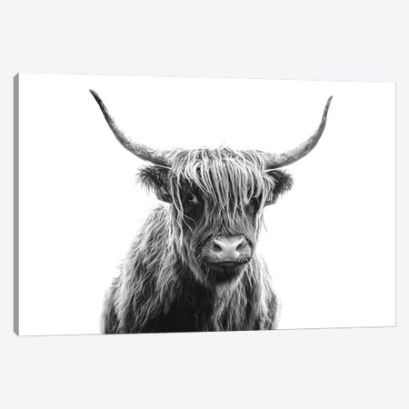 Highland Cow Portrait Canvas Print #KMD67} by Karen Mandau Canvas Art