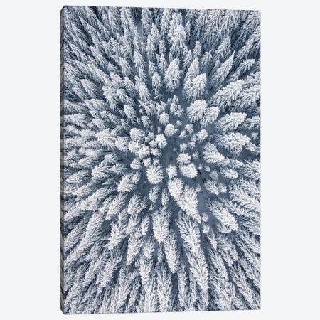 Aerial Photo Of A Winter Pine Forest Canvas Print #KMD6} by Karen Mandau Canvas Artwork