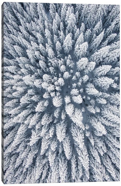 Aerial Photo Of A Winter Pine Forest Canvas Art Print