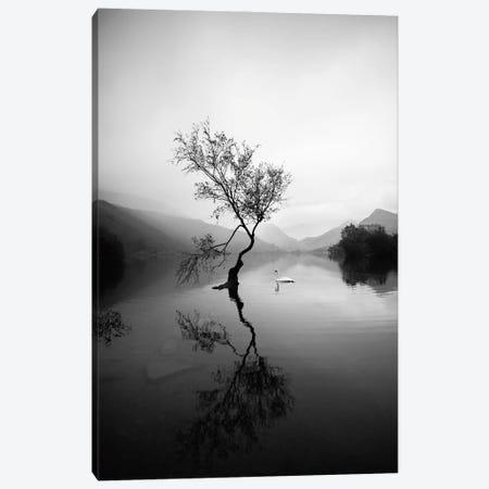 Lone Tree At Llyn Padarn In Wales Black And White Canvas Print #KMD75} by Karen Mandau Art Print