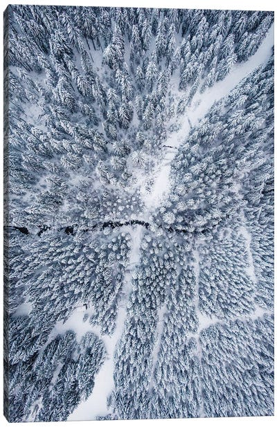 Aerial Photo Of A Winter Forest Canvas Art Print