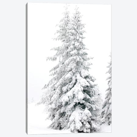 All White Pine Trees Canvas Print #KMD8} by Karen Mandau Canvas Print