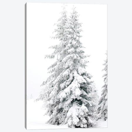 All White Pine Trees Canvas Print #KMD8} by Karen Mandau Canvas Print