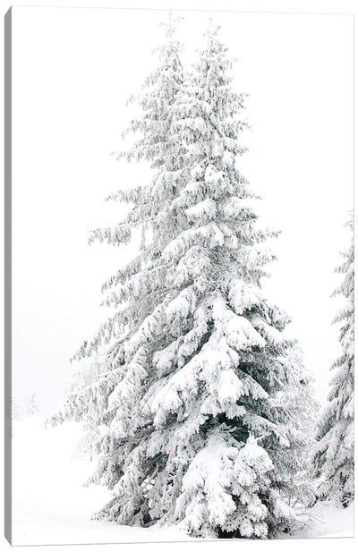 All White Pine Trees Canvas Art Print
