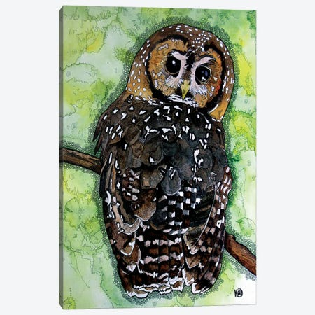 Northern Spotted Owl Canvas Print #KMW38} by Kim Winberry Art Print