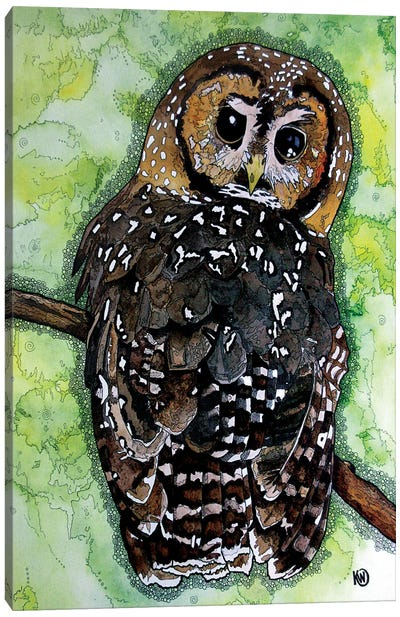 Northern Spotted Owl Canvas Art Print