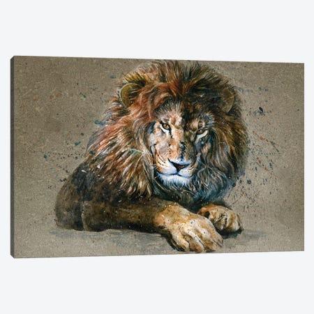 Lion III Canvas Print #KNK30} by Konstantin Kalinin Canvas Art Print