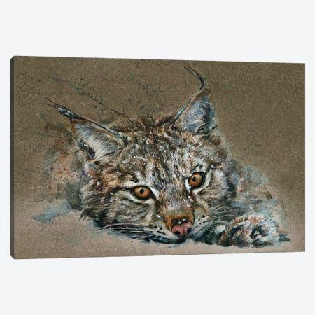 Lynx Canvas Print #KNK44} by Konstantin Kalinin Art Print