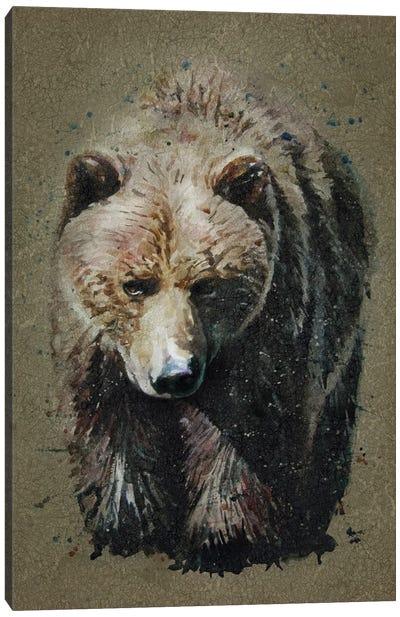 Bear Bg Canvas Art Print