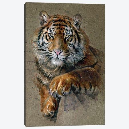 Tiger Brown Canvas Print #KNK63} by Konstantin Kalinin Canvas Art