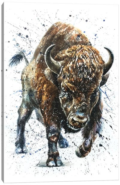 Buffalo II Canvas Art Print