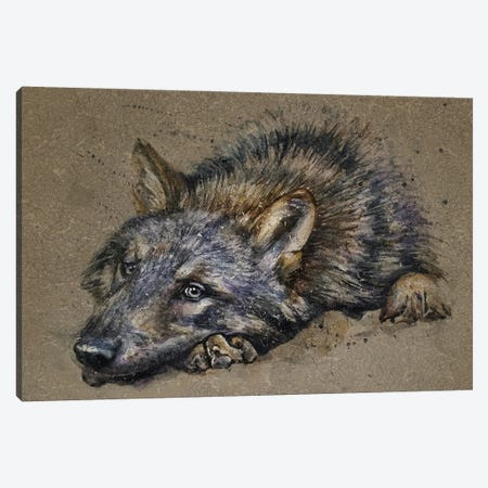 Wolf Canvas Print #KNK80} by Konstantin Kalinin Canvas Art