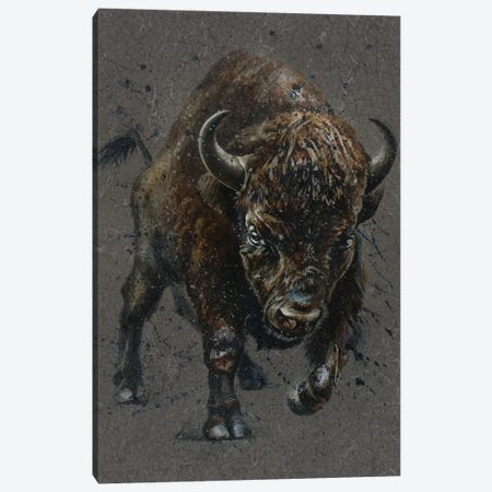Buffalo Brown Canvas Print #KNK9} by Konstantin Kalinin Canvas Print