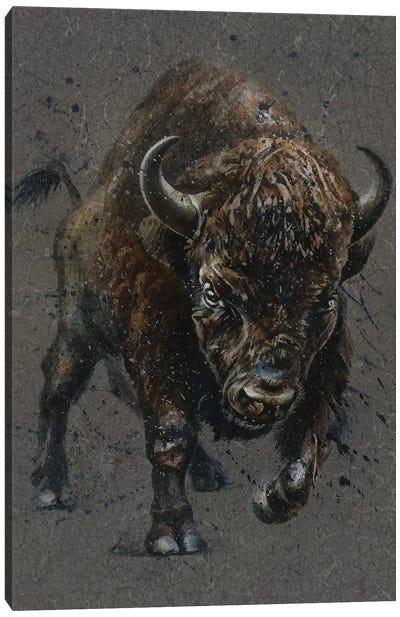 Buffalo Brown Canvas Art Print