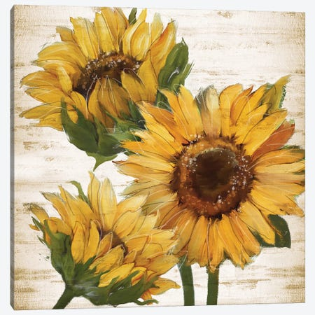 Sunflower Summer I Canvas Print #KNU139} by Conrad Knutsen Canvas Art