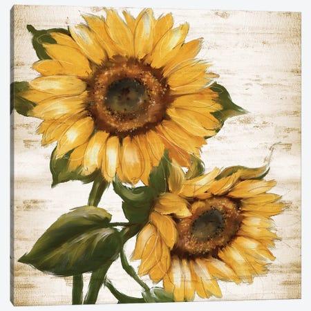 Sunflower Summer II Canvas Print #KNU140} by Conrad Knutsen Canvas Print