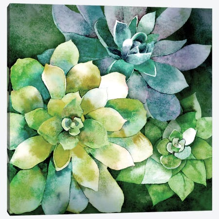 Summer Succulents Canvas Print #KNU43} by Conrad Knutsen Canvas Wall Art