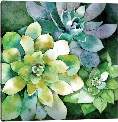 Summer Succulents Canvas Art Print
