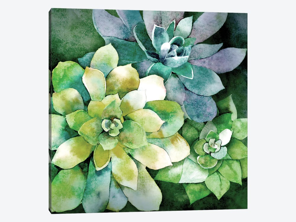Summer Succulents by Conrad Knutsen 1-piece Canvas Art Print