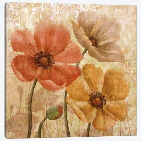 Poppy Allure I Canvas Print #KNU94} by Conrad Knutsen Canvas Wall Art