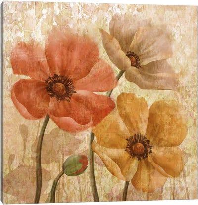 Poppy Allure I Canvas Art Print