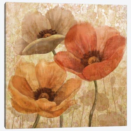 Poppy Allure II Canvas Print #KNU95} by Conrad Knutsen Canvas Art