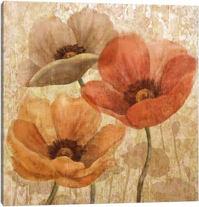 Poppy Allure II Canvas Art Print