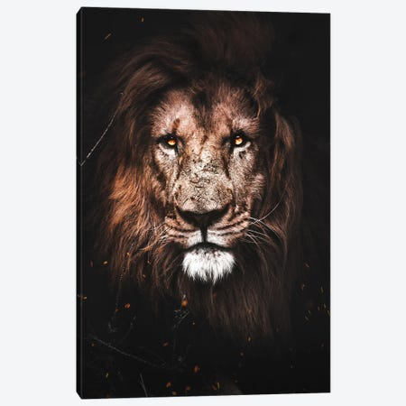 Lion Canvas Print #KNV19} by Milos Karanovic Canvas Artwork