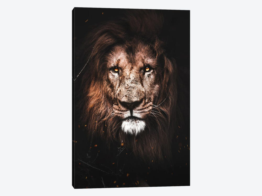 Lion by Milos Karanovic 1-piece Canvas Art