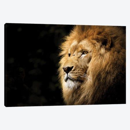Lion View Canvas Print #KNV21} by Milos Karanovic Art Print