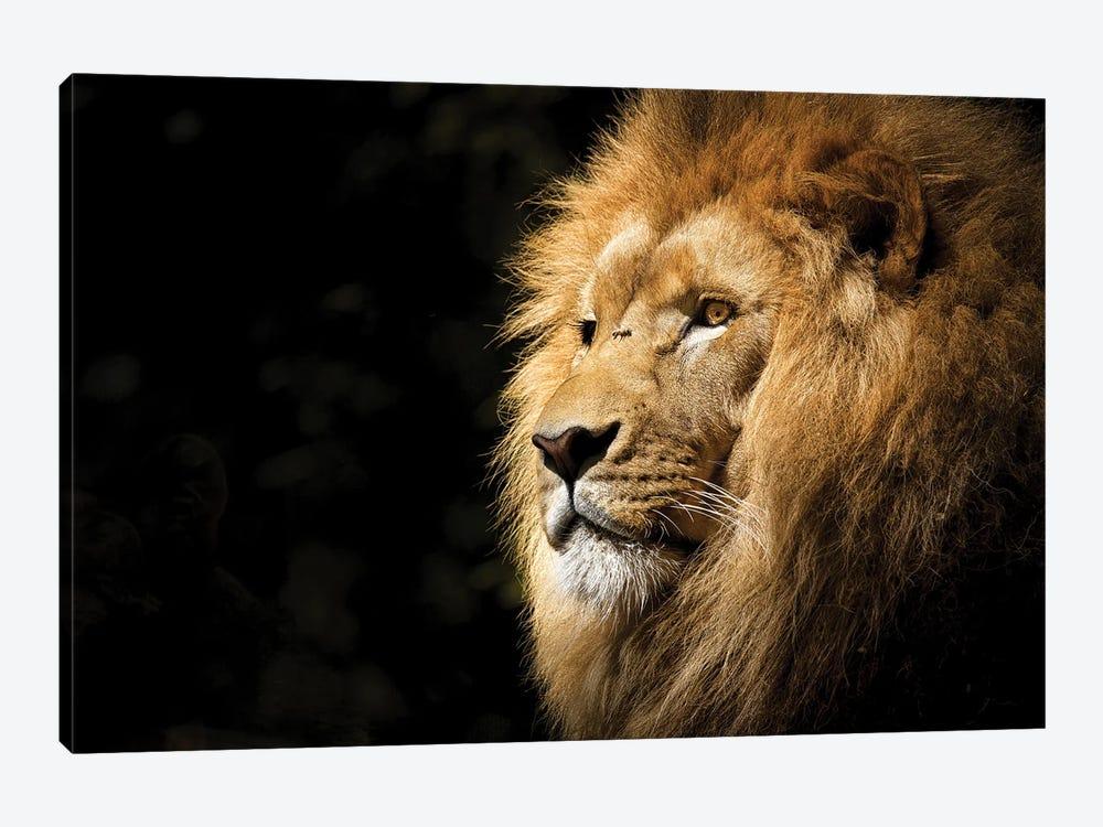Lion View by Milos Karanovic 1-piece Art Print