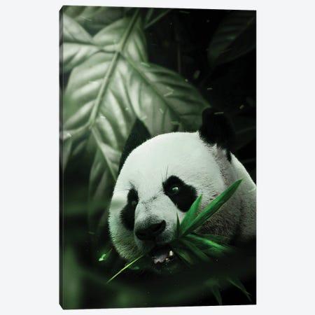 Panda Canvas Print #KNV24} by Milos Karanovic Canvas Artwork