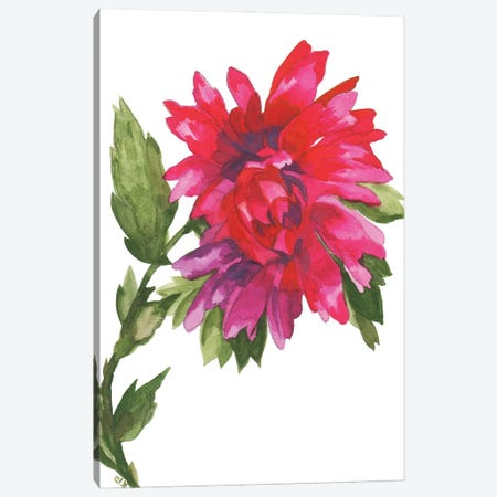 Wild Magenta Dahlia Canvas Print #KPA192} by Kim Parker Art Print