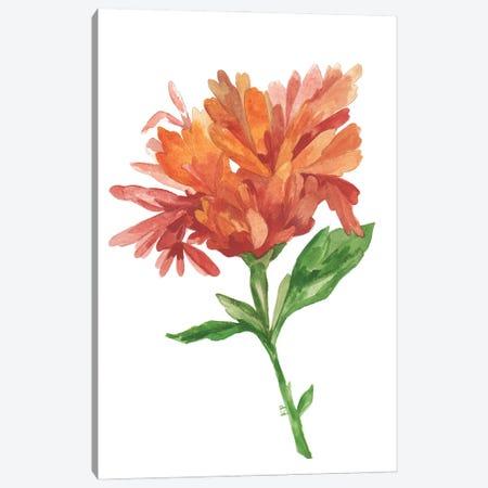 Wild Rust Dahlia Canvas Print #KPA198} by Kim Parker Canvas Print
