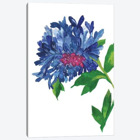 Blue Zinnia Canvas Print #KPA199} by Kim Parker Canvas Print