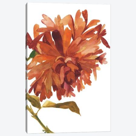 Wild Amber Dahlia Canvas Print #KPA203} by Kim Parker Canvas Art Print