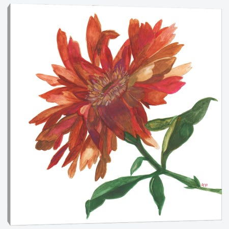 Autumn Zinnia Canvas Print #KPA214} by Kim Parker Canvas Art Print