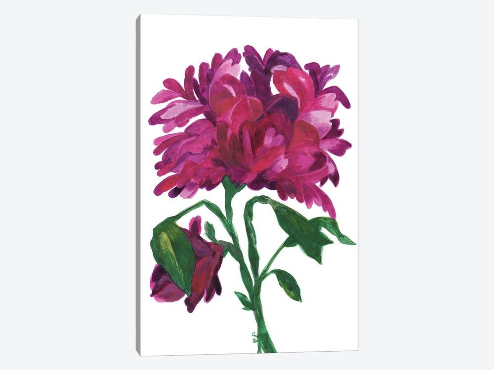 Violet Wild Zinnia by Kim Parker 1-piece Canvas Print