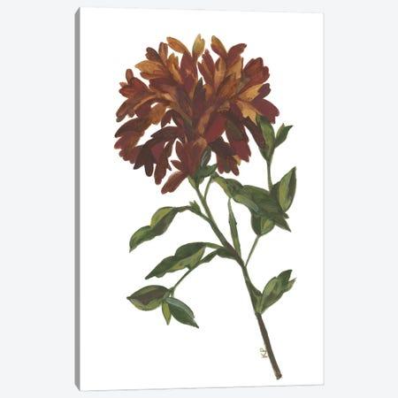Autumn Iris Canvas Print #KPA228} by Kim Parker Canvas Art Print