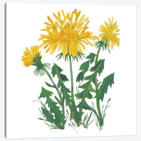 Three Dandelions Canvas Print #KPA229} by Kim Parker Canvas Art Print