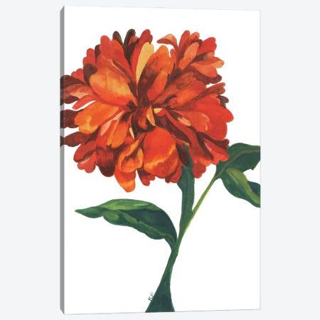 Wild Orange Dahlia Canvas Print #KPA237} by Kim Parker Art Print