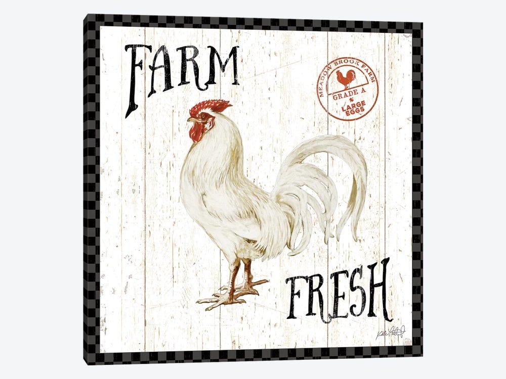 Free Range Fresh III Checker Border by Katie Pertiet 1-piece Canvas Art Print
