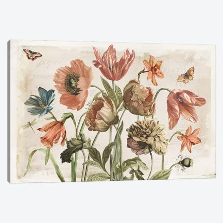 Antiquarian Blooms II Canvas Print #KPE61} by Katie Pertiet Canvas Art