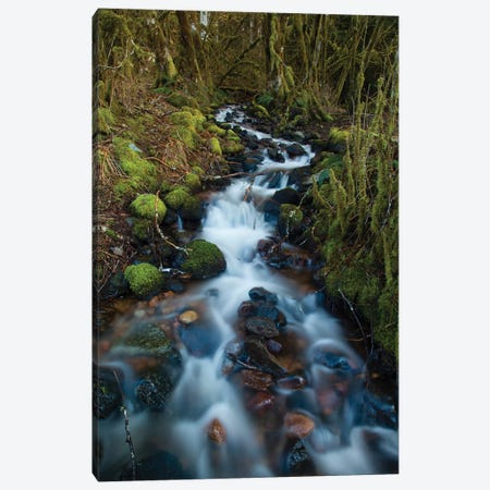 Stream In The Rainforest Near Alice Lake Provincial Park, Squamish, British Columbia, Canada Canvas Print #KPI11} by Kristin Piljay Canvas Print