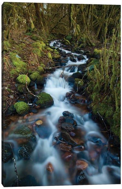 Stream In The Rainforest Near Alice Lake Provincial Park, Squamish, British Columbia, Canada Canvas Art Print