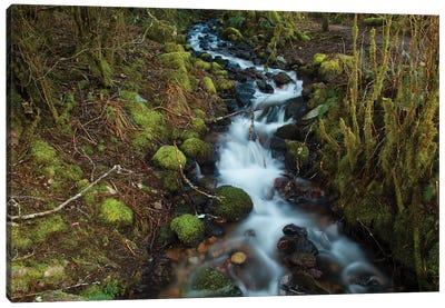 Stream In The Rainforest Near Alice Lake Provincial Park. Squamish, British Columbia, Canada. Canvas Art Print